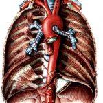 Атеросклероз аорты: причины, симптомы, лечение, профилактика