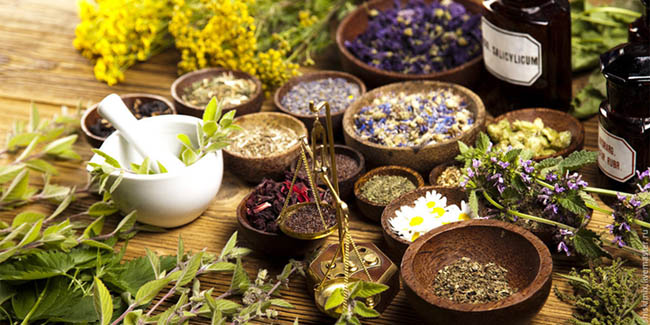 Лечебные травы при атеросклерозе