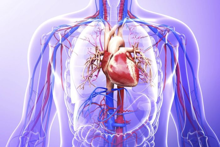 Болезни сердца тахикардия симптомы