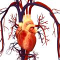 Развитие мелкоочагового инфаркта миокарда: причины, симптомы и лечение