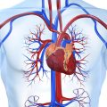 Что собой представляет функциональная кардиопатия