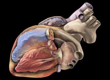 Проявления синдрома ранней реполяризации желудочков, диагностика и лечение