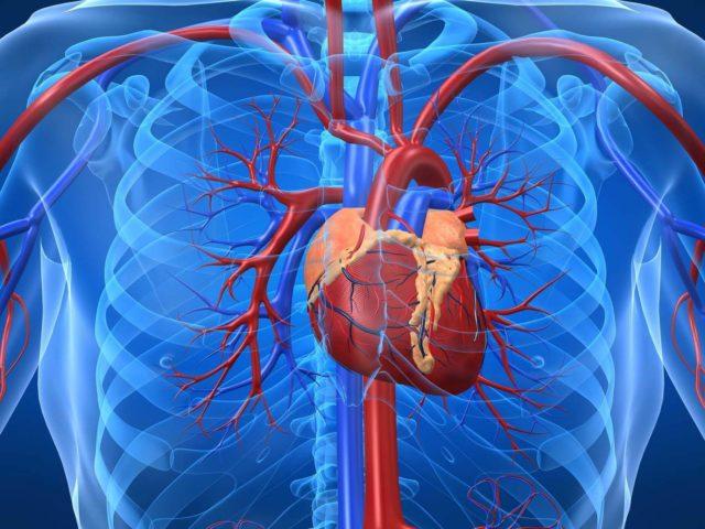 Стадии инфаркта миокарда и таблица классификации заболевания