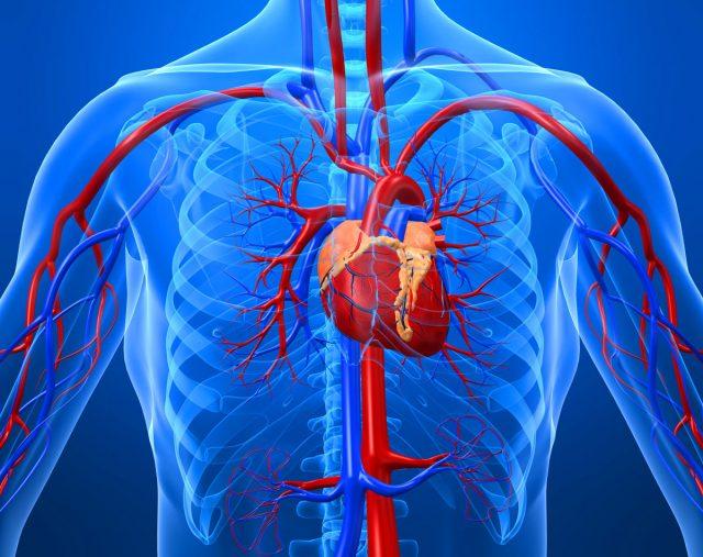 Аневризма восходящего отдела аорты: причины, симптомы и особенности лечения