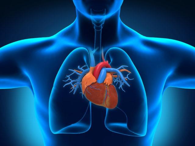 Парасистолия сердца: этиология, симптоматика, формы проявления заболевания, терапия