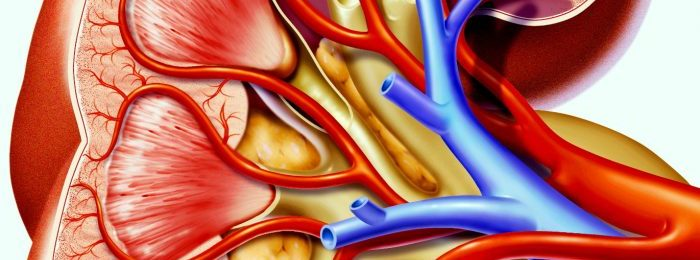 Причины развития и способы лечения тромбоза почечных вен
