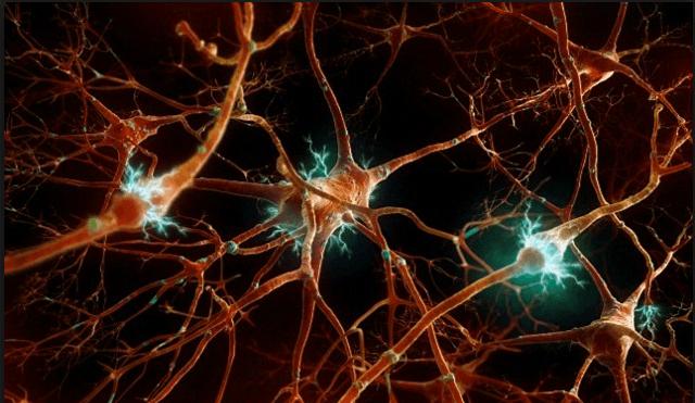Нейроны коры головного мозга человека